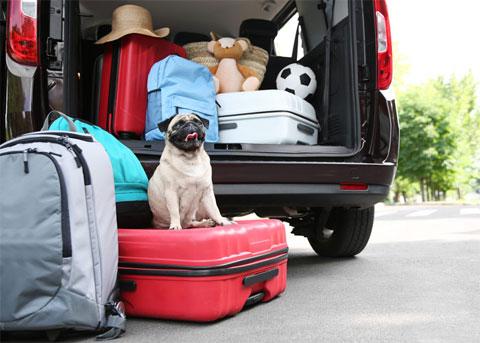 Mit dem Hund nach Dänemark - Auto