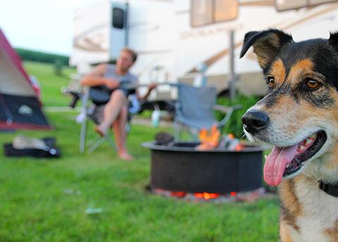 Camping mit Hund in Dänemark