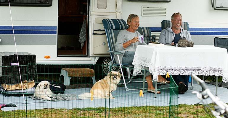 Camping mit Hund in Dänermark