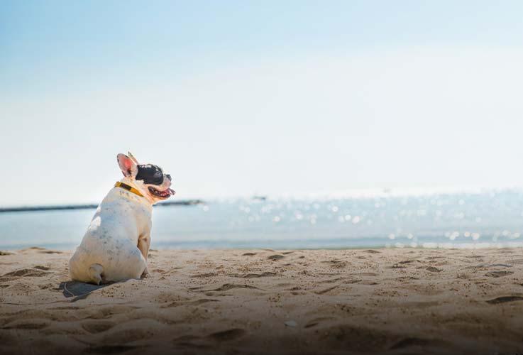 Hunde-Urlaub in Dänemark