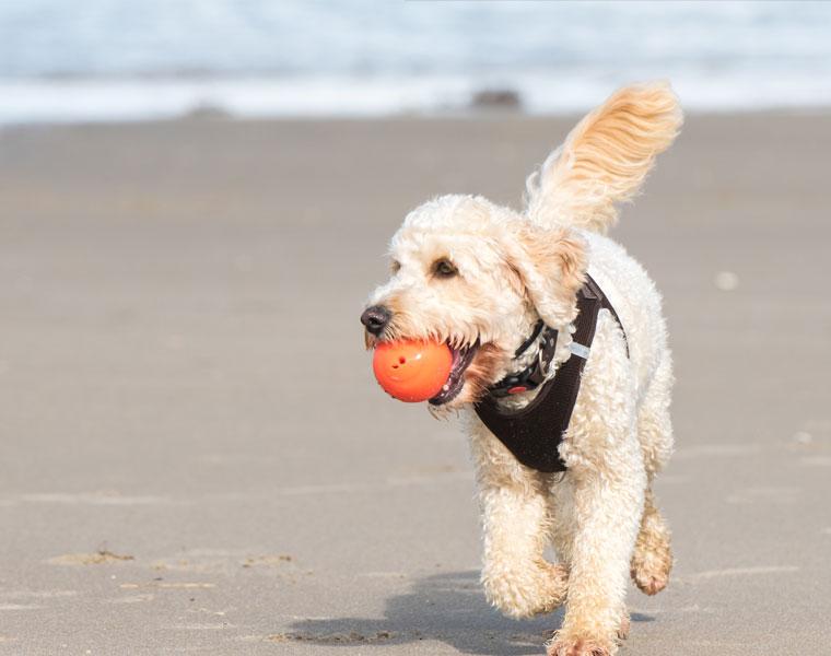 Dänemark Urlaub Mit Hund Im Ferienhaus An Ostsee Nordsee